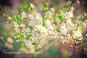 цветы коломенское