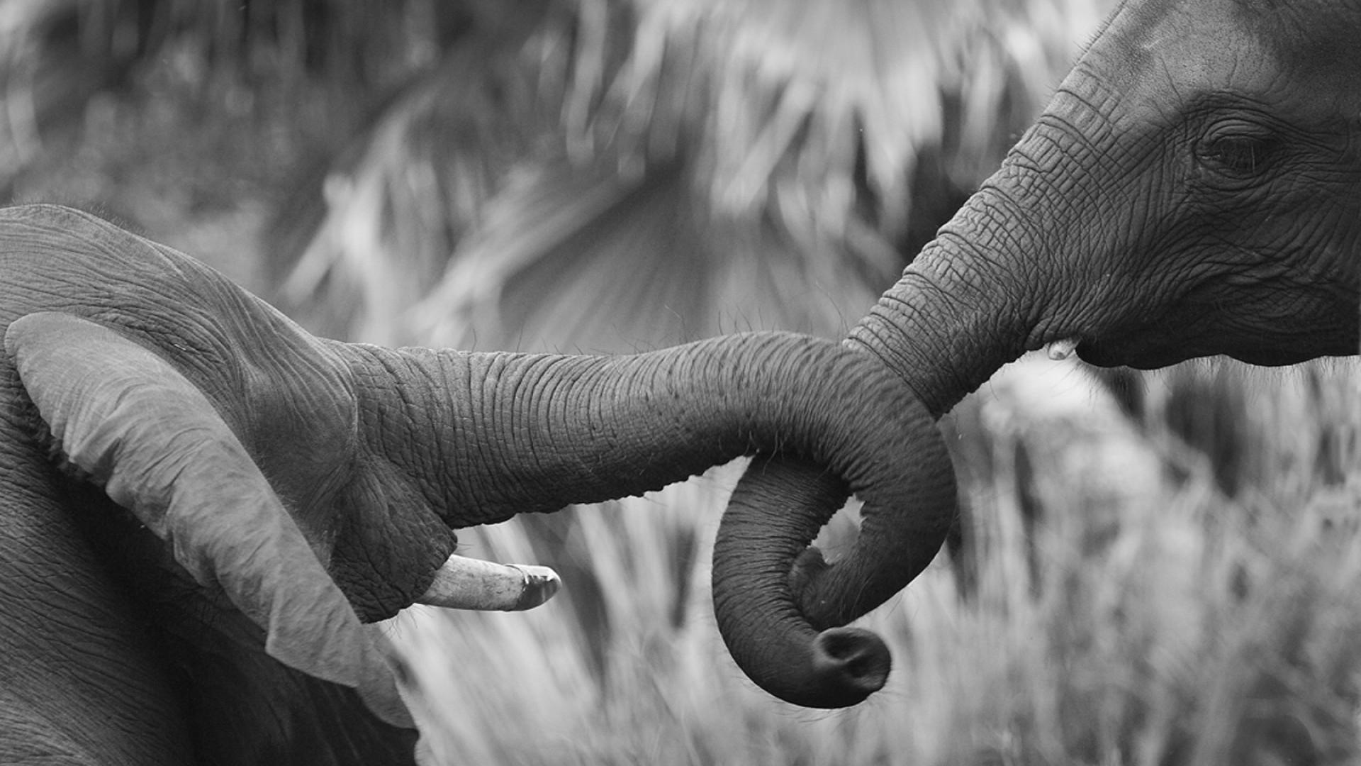 круг слонихкруг слоних